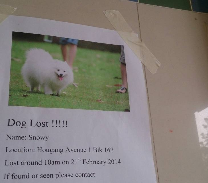 Lost Puppy 2