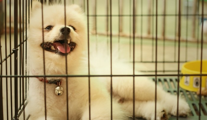 Dog Crying in Crate