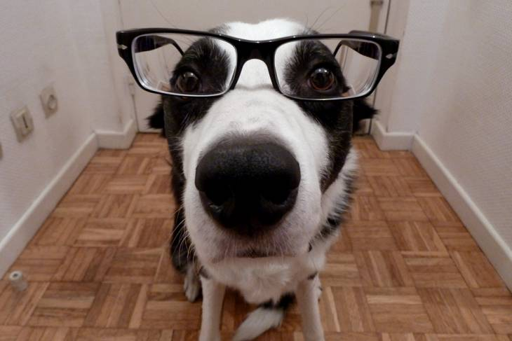 Dog IQ Test 2