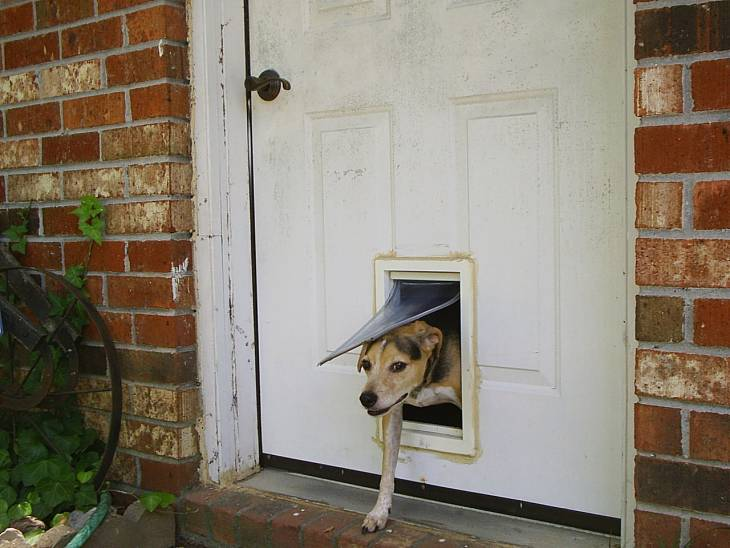 Doggie Door Training Tips Seeing Things Through