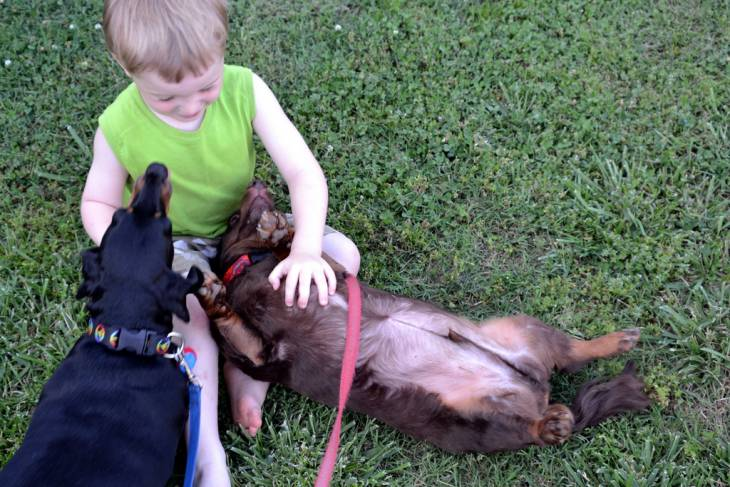 Dogs reduce allergies in kids
