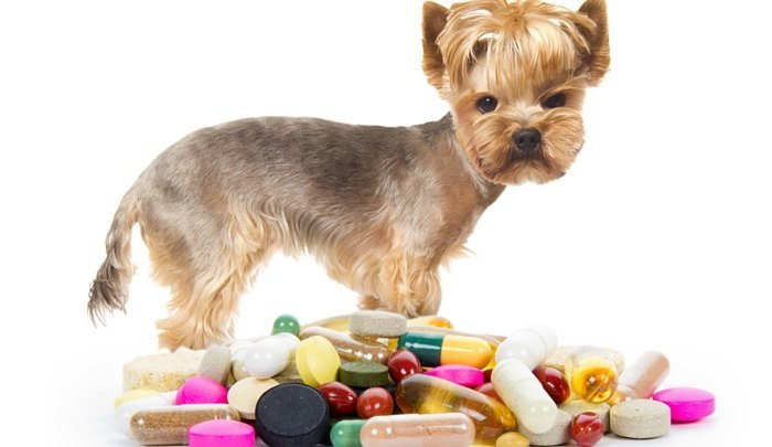 Can I Give My Dog Human Vitamins