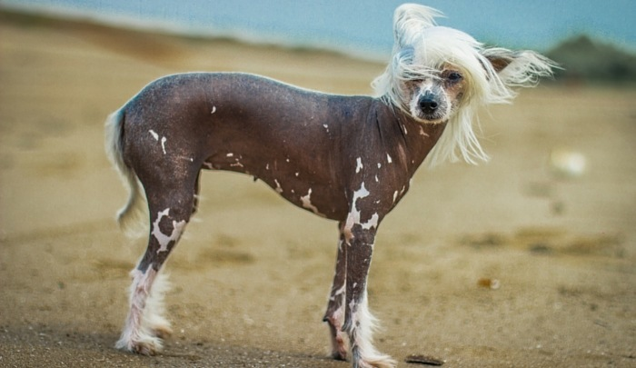 A Look at Dogs That Don't Shed (Clean Living)