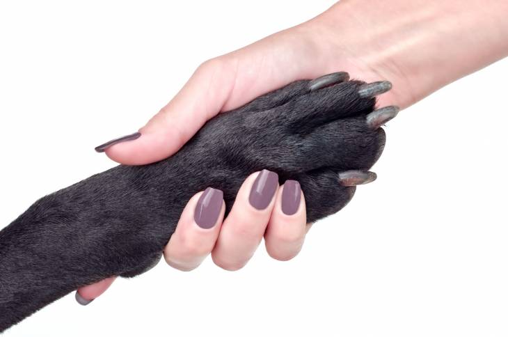 How to Deal with Long Dog Nails (Helpful Tips)