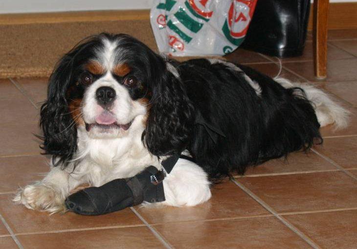 Neosporin on dogs 2