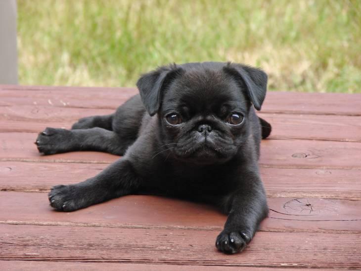 Adopting a Puppy 4