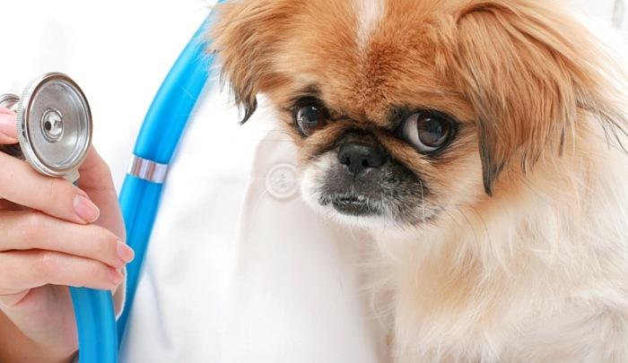 Sick Puppy 1