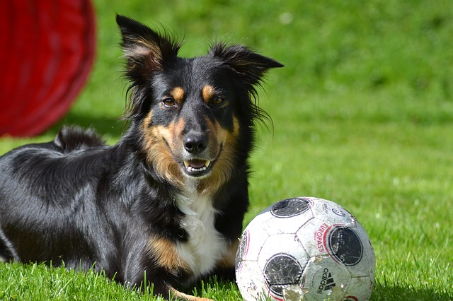 dog_1480176427