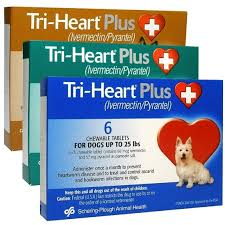 best heartworm medicine for dogs