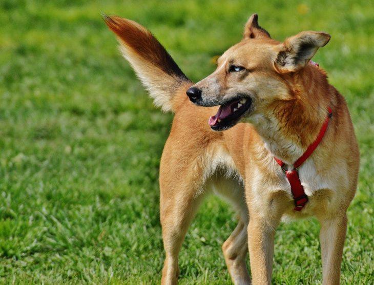 pet first insurance
