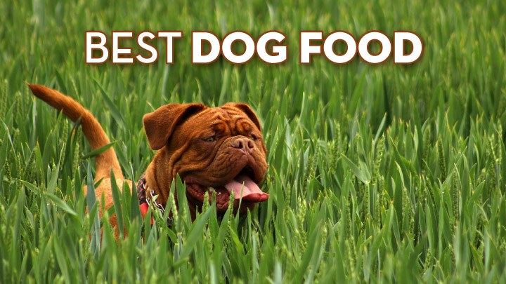 Number One Rated Dry Dog Food