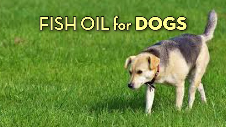 the best fish oil for dogs 5 highly effective products