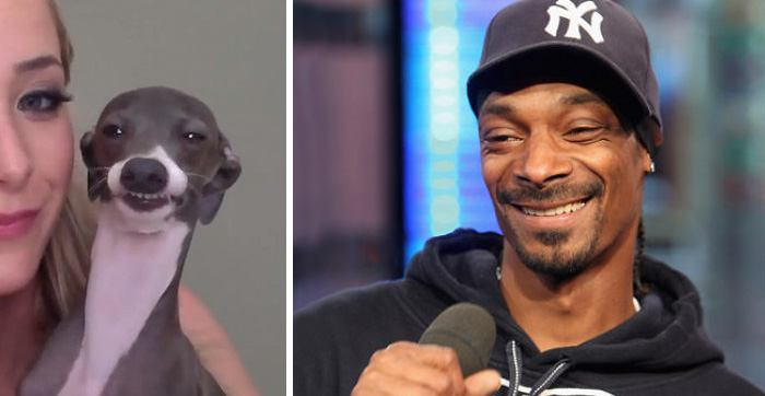 Long-lost Brother of Snoop Dogg