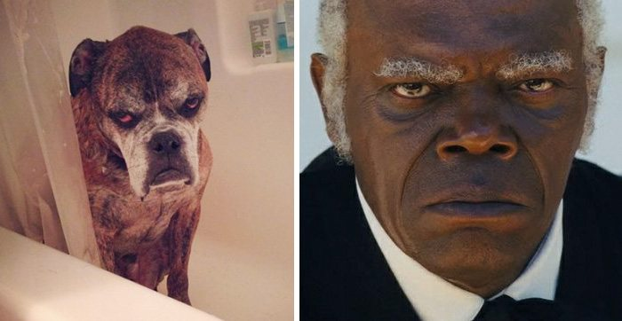 Dog Has The Exact Same Look As Samuel L. Jackson