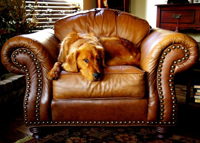 Best Dog Furniture