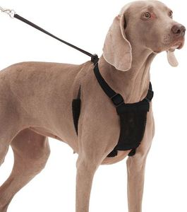 Sporn Non-Pull Mesh Dog Harness