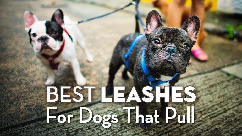 leashes for dogs that pull-01