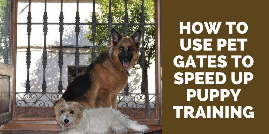pet gates for training