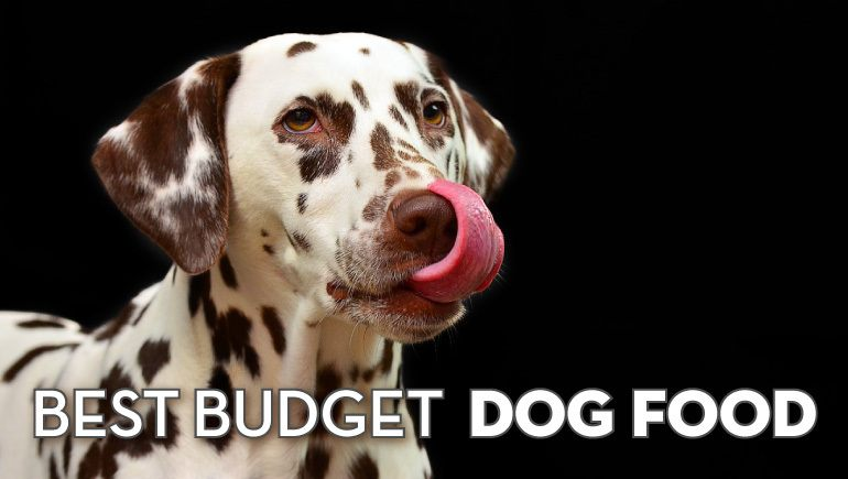 5 Best Budget Dog Food Picks: Cheap (But Quality!) Dog Food