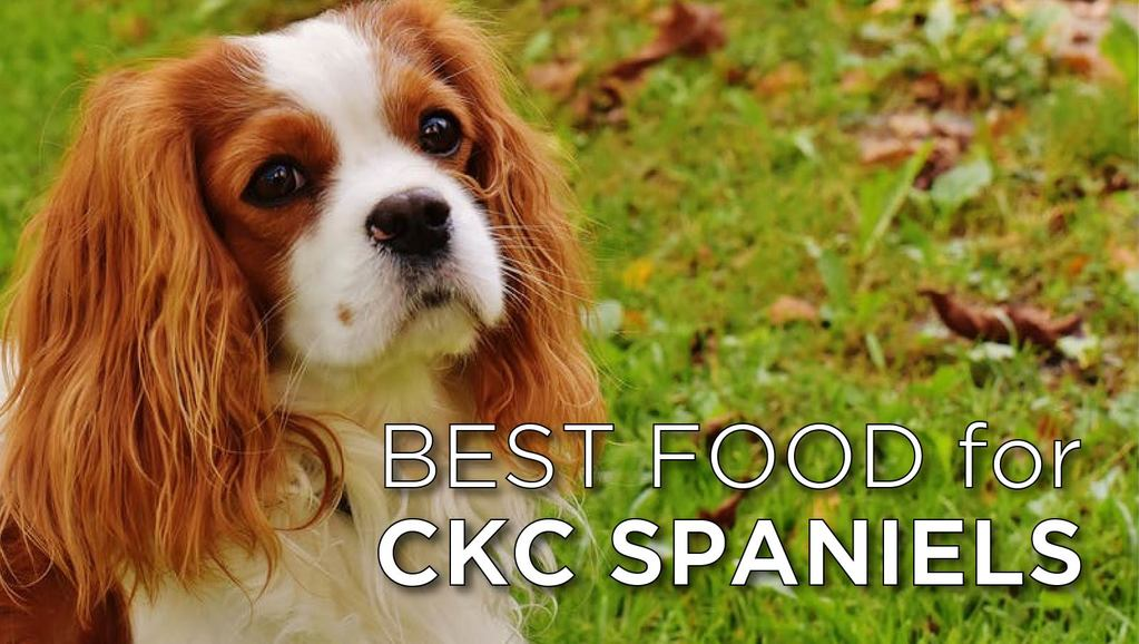 best food for cavaliers-02