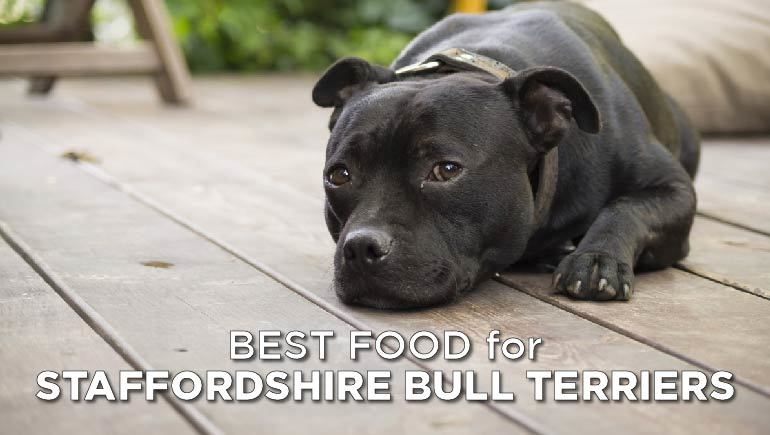 best food for staffordshire bull terrier-02