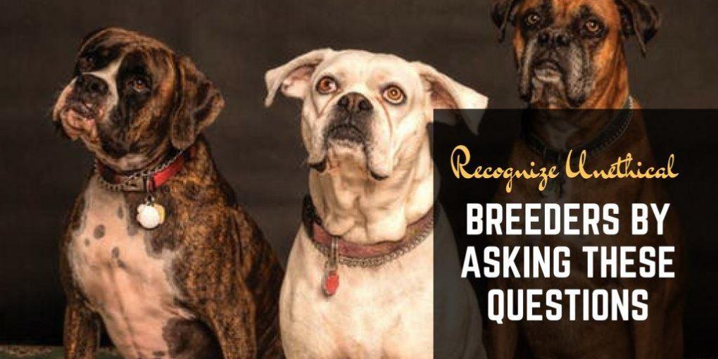 identifying unethical dog breeders