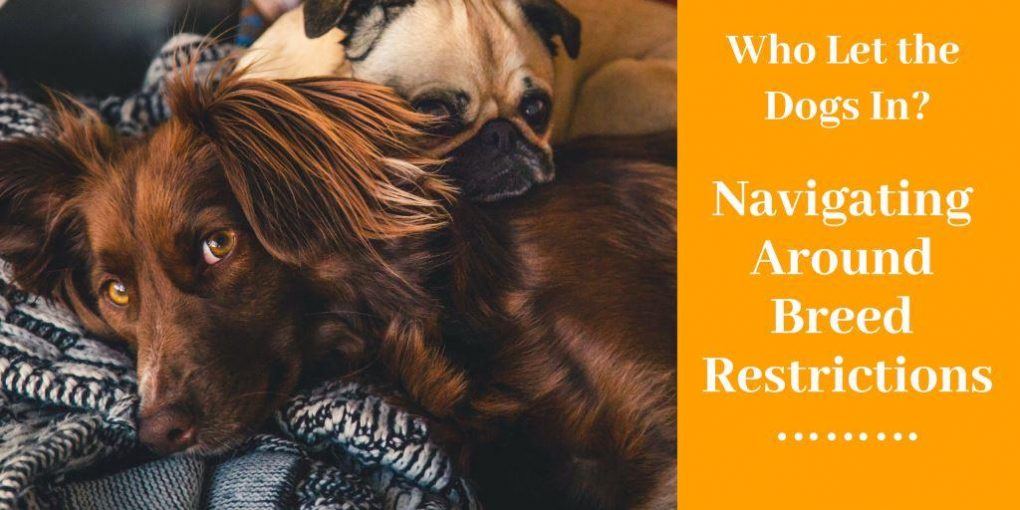dog breed restriction
