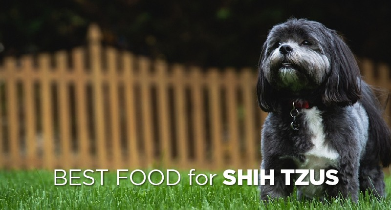 Best Dog Food for Shih Tzus: How to Pick the Good Shih