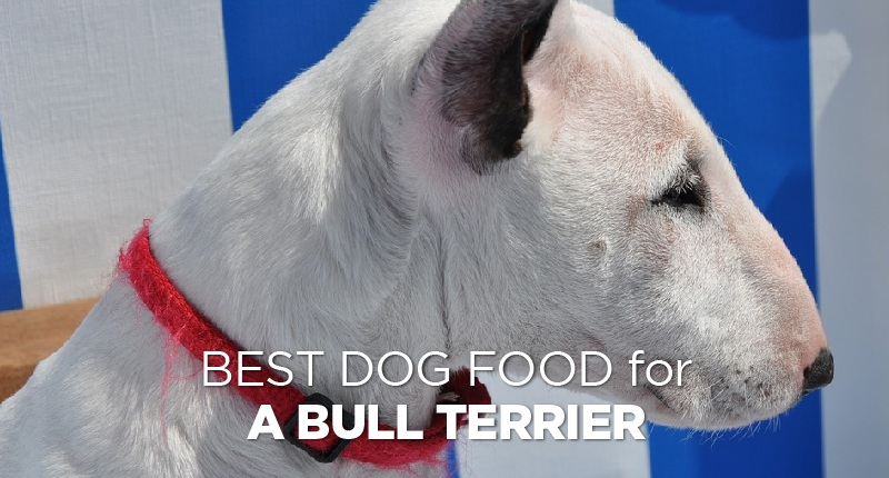 Dog Food For A Bull Terrier