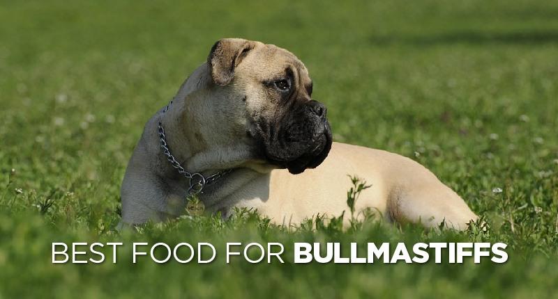 Best Dog Food For Bullmastiffs