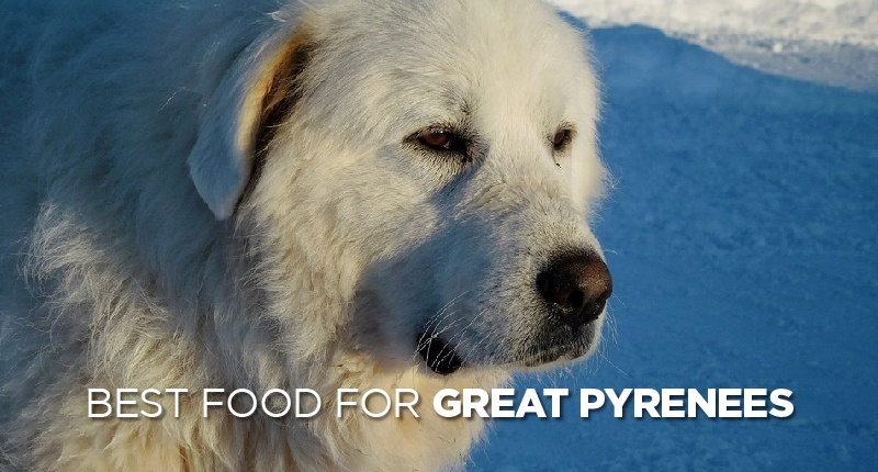 food for great pyrenees-01