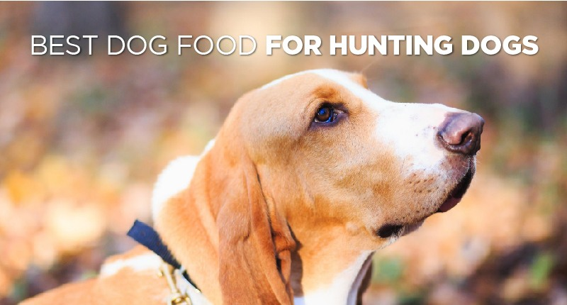 food for hunting dogs-01
