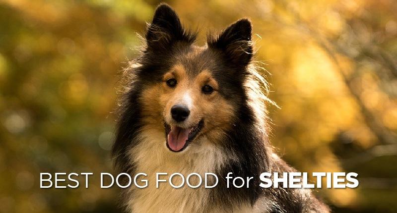 Best Dog Food for Shelties