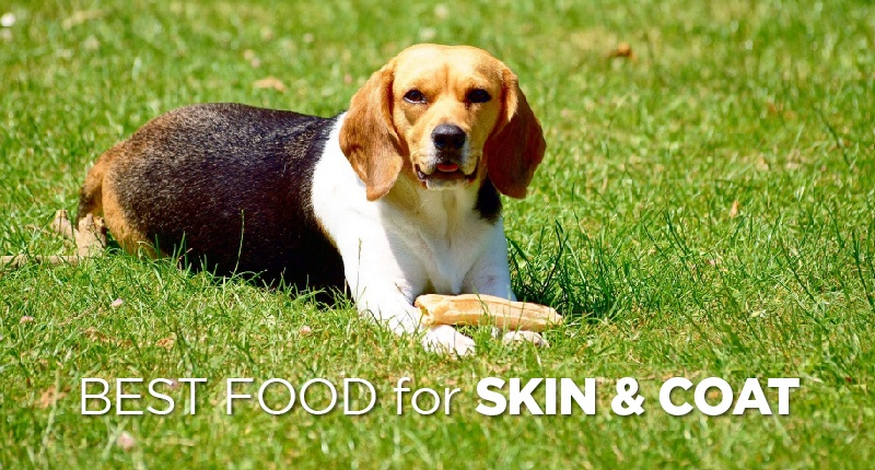 Best Dog Food For Skin And Coat