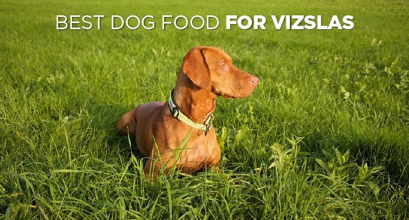 Best Dog Food For Vizslas