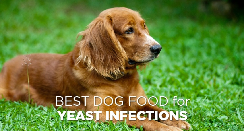 food for yeast infections-01