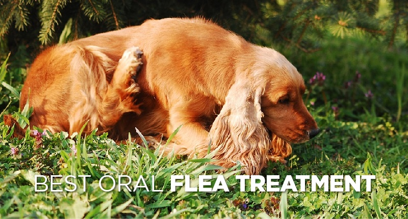 Best Oral Flea Treatment