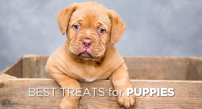 Purina Pro Plan Veterinary Diets UR Urinary Ox St Canine Formula Dog Food