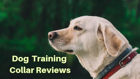 best dog training collar review