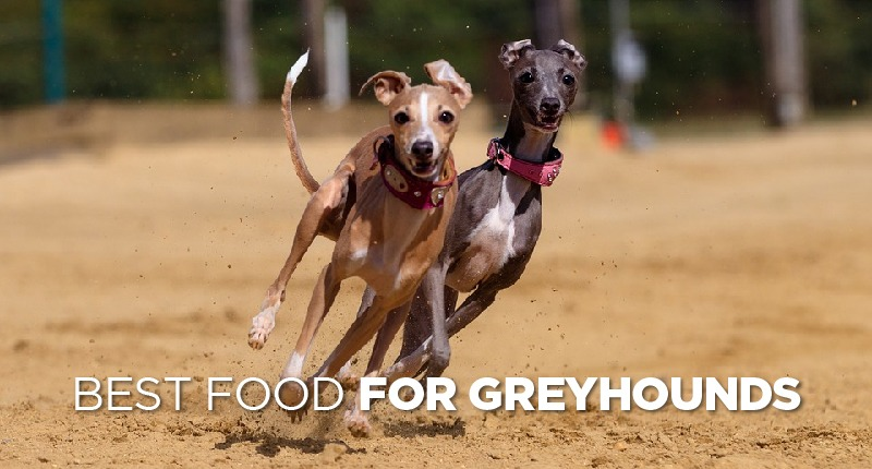 food for greyhounds