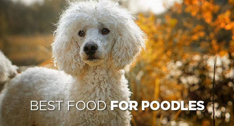 Best Food For Poodles