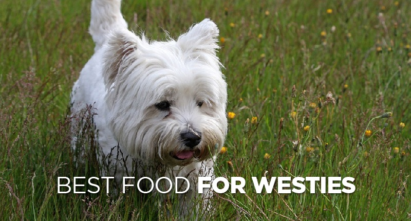 Best Food For Westies