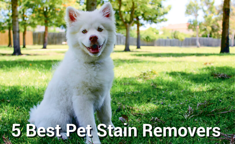 5 Best Pet Stain Removers