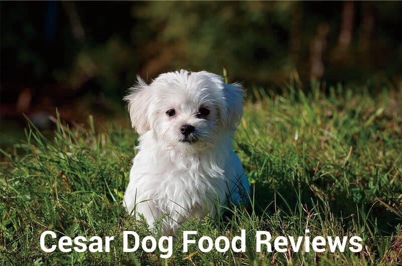 Cesar Dog Food Reviews