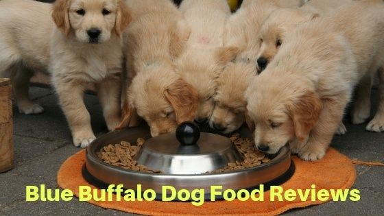 blue buffalo dog food reviews