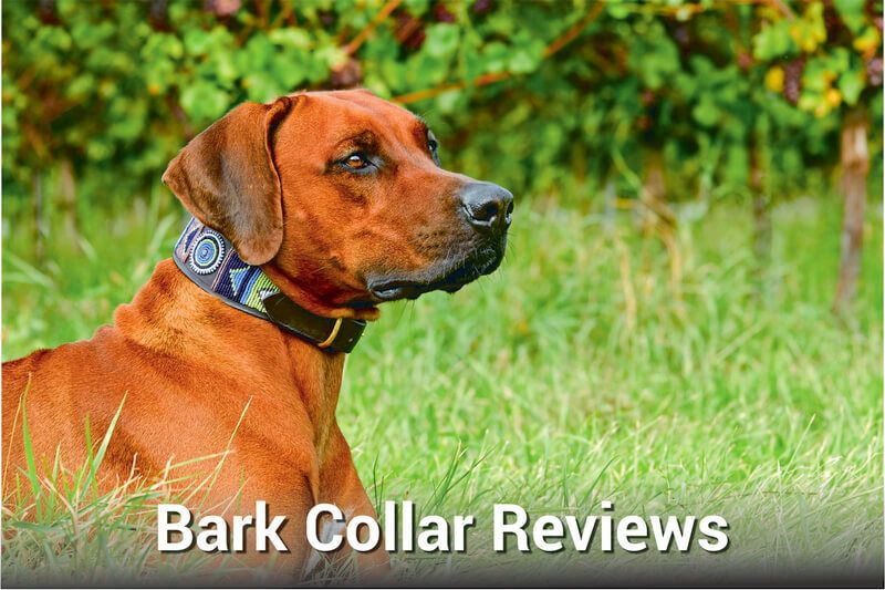 Bark collar reviews