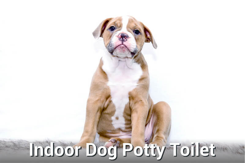 Indoor dog potty toilet