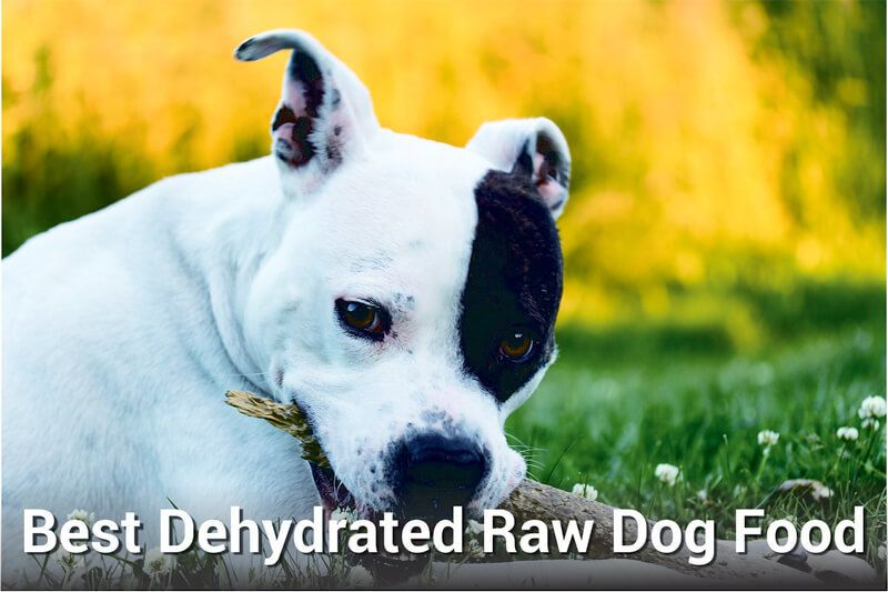 best dehydrated raw dog food