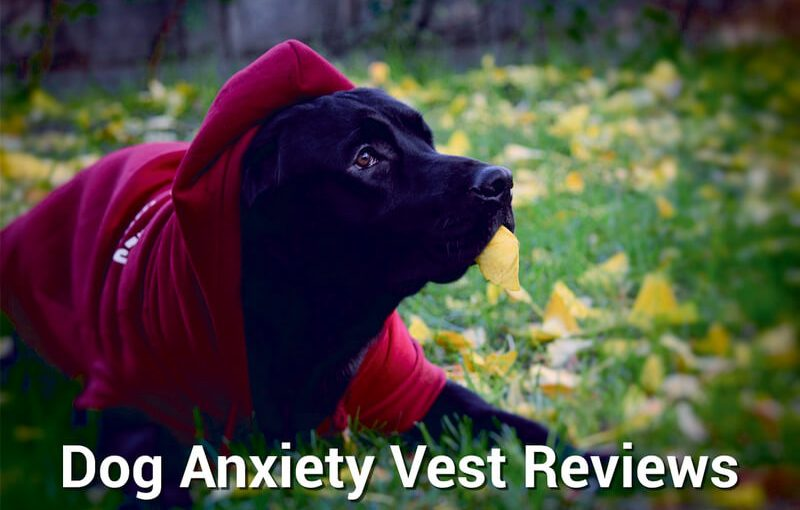 dog anxiety vest reviews