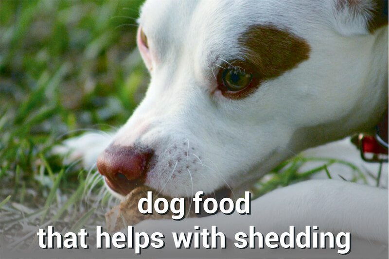 dog food that helps with shedding